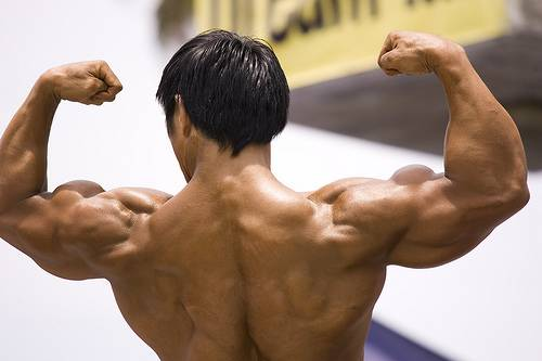 Myprotein Community & Forums - Muscular Hypertrophy
